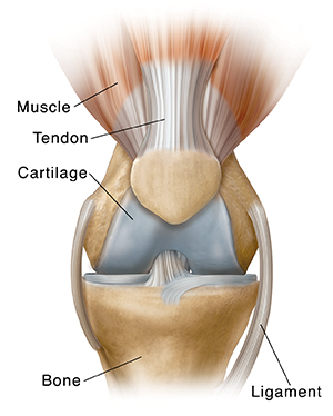 Front view of normal knee.